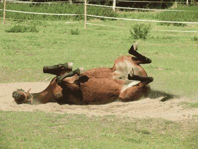 """Hier fühlt sich sogar das Pferd """"sauwohl"""" (Foto anklicken)"""