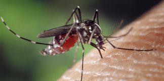 Sommerabend - Alle Mücken sind schon da