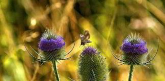 Alternative Therapie gegen Borreliose - im Herbst ist Erntezeit
