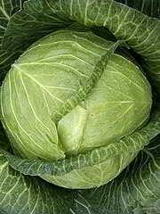 Aus Weiskohl wird Sauerkraut gemacht
