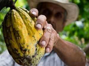 Rohschokolade aus Kakao