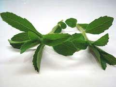 Steviablätter