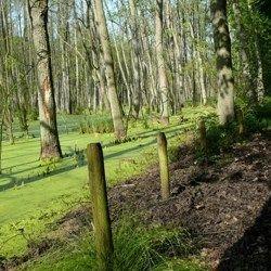 Nordic Walking vorbei an Auenwäldern
