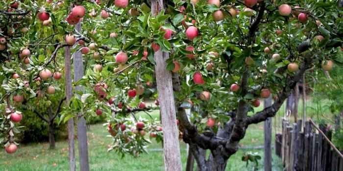 alte Obst- und Gemüsesorten werden immer beliebter