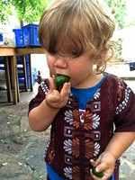 Den Geschmackssinn eines Kindes prägen