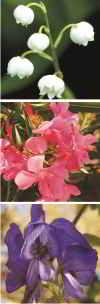 giftige Blüten
