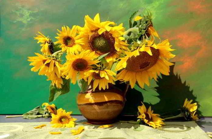 Sonnenblumen selber ziehen, vom Frühjahr bis in den Herbst