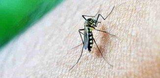 Viele Pflanzen helfen gegen Insekten