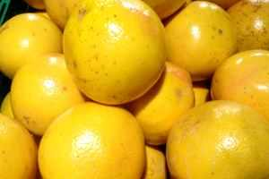 Pflanzen statt Antibiotika - Grapefruit wirkt gegen Viren, Bakterien und Pilze