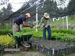 Moringa in Entwicklungsländern