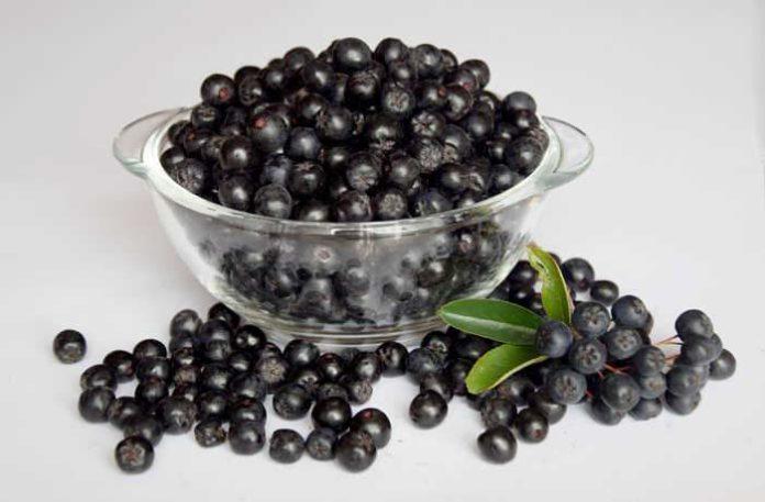 Aronia - Beerenstark für die Gesundheit