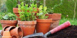 Schadstoffkontrollierte Pflanzerde sollte bevorzugt werden