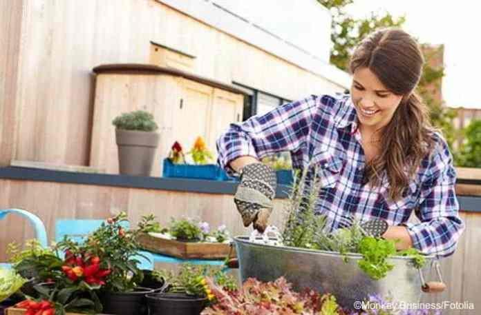 Gärtnern In Der Wohnung Und Auf Dem Balkon