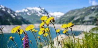 Gesunde Wildkräuter im April - wofür man sie einsetzen kann