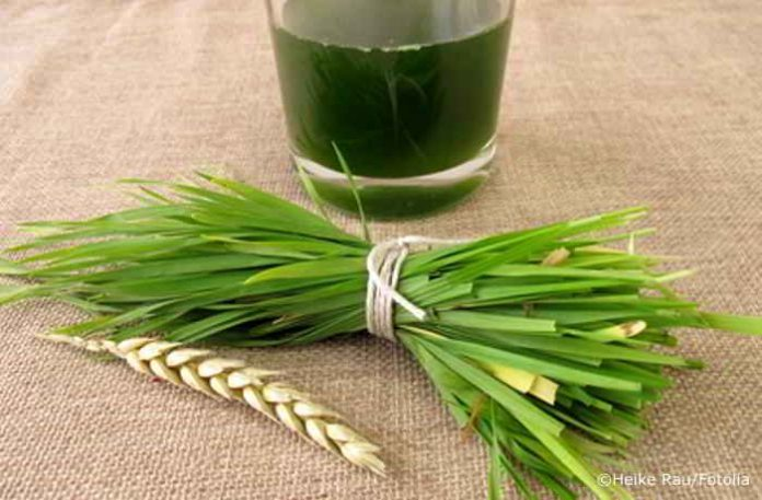 Weizengras, den Körper mit dem Heil- und Superfood entgiften