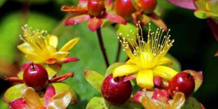 Pflanzen statt Antibiotika - Teil 1