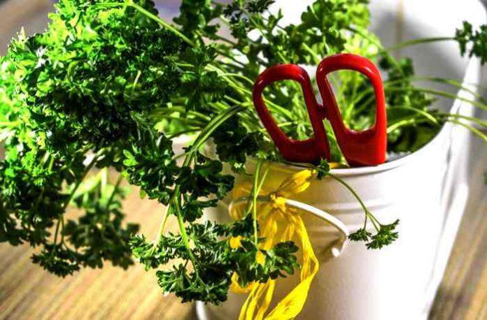 Gesunde Kräuter im Juli und ihre Einsatzmöglichkeiten