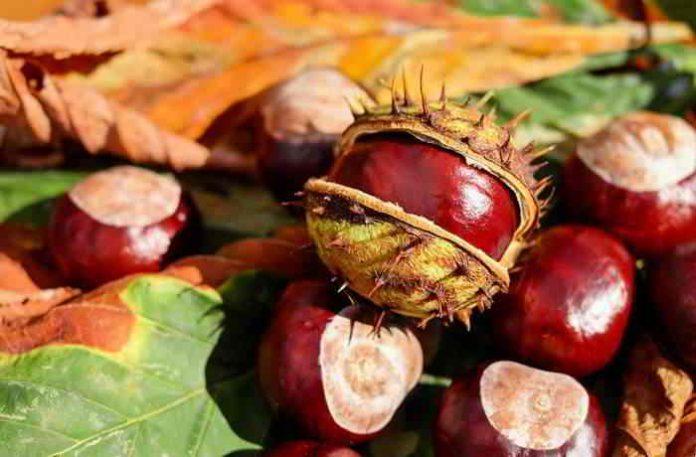 Bio-Waschmittel aus Kastanien ganz einfach selber herstellen