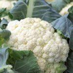 Blumenkohl - seine gesunden Inhaltsstoffe schützen sogar vor Krebs