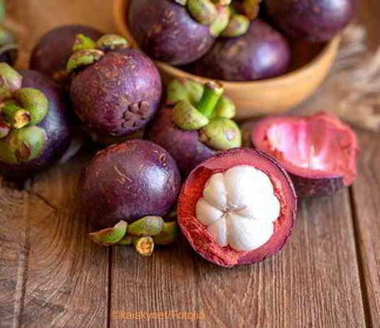 Das Superfood Mangostan - eine gesunde, tropische Heilpflanze