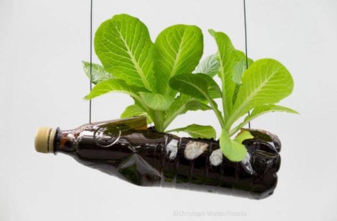 Pflanzliche Küchenabfällen anbauen und nachhaltig ernten