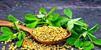 Bockshornklee - alte Heilpflanze gegen Wohlstandskrankheiten