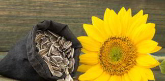 Sonnenblumenkerne - das gesunde, regionale Superfood