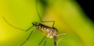 Die Gefahren von Insektenstichen und wie man sich vor Insekten schützt